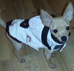 zimná bunda pre psa