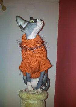 svetr kočička sphynx