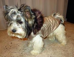 šón béžovo hnědý s kapucí a kožešinou