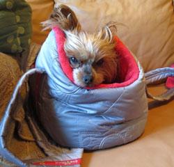 taška pro psa