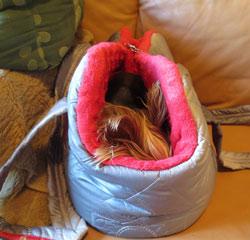 taška pro schovaného psa