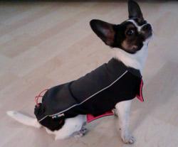 softshelová vesta pro psa