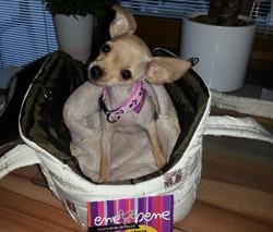 taška pre psa